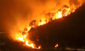 Amazon fires, 'all you can see is death'