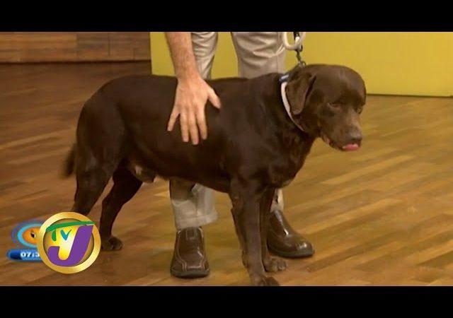 TVJ Smile Jamaica: Obesity in Dogs – January 27 2020