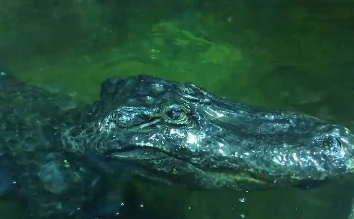 Hitler's Rumored Pet Alligator Dies at 84